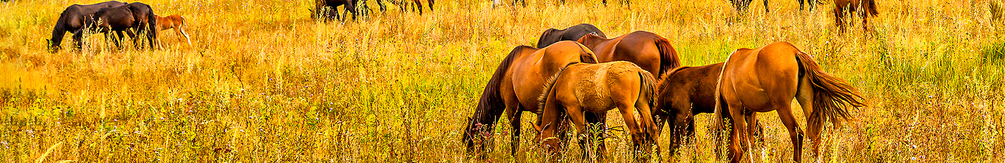 a picture of horses in a field in the autumn