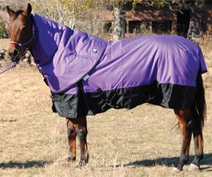 Foal Blankets
